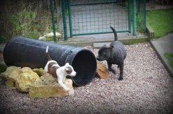 Afficher le site de l'élevage Angel Del Ronda Casa
