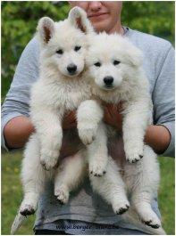 Afficher le site de l'élevage P'tits Loups D'amour