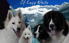 Afficher le site de l'élevage Of Easy White