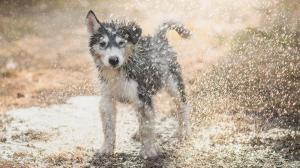 Limiter les odeurs corporelles chez les chiens et les chats