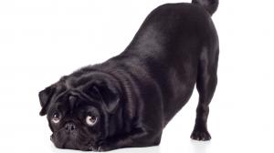 Flatulences canines : il faut que ça cesse !