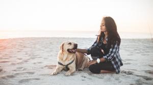 L'été arrive! Les conseils pour passer de bonnes vacances avec votre chien