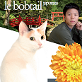 Race chat Japanese bobtail poil long