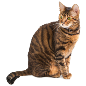 Race chat Toyger