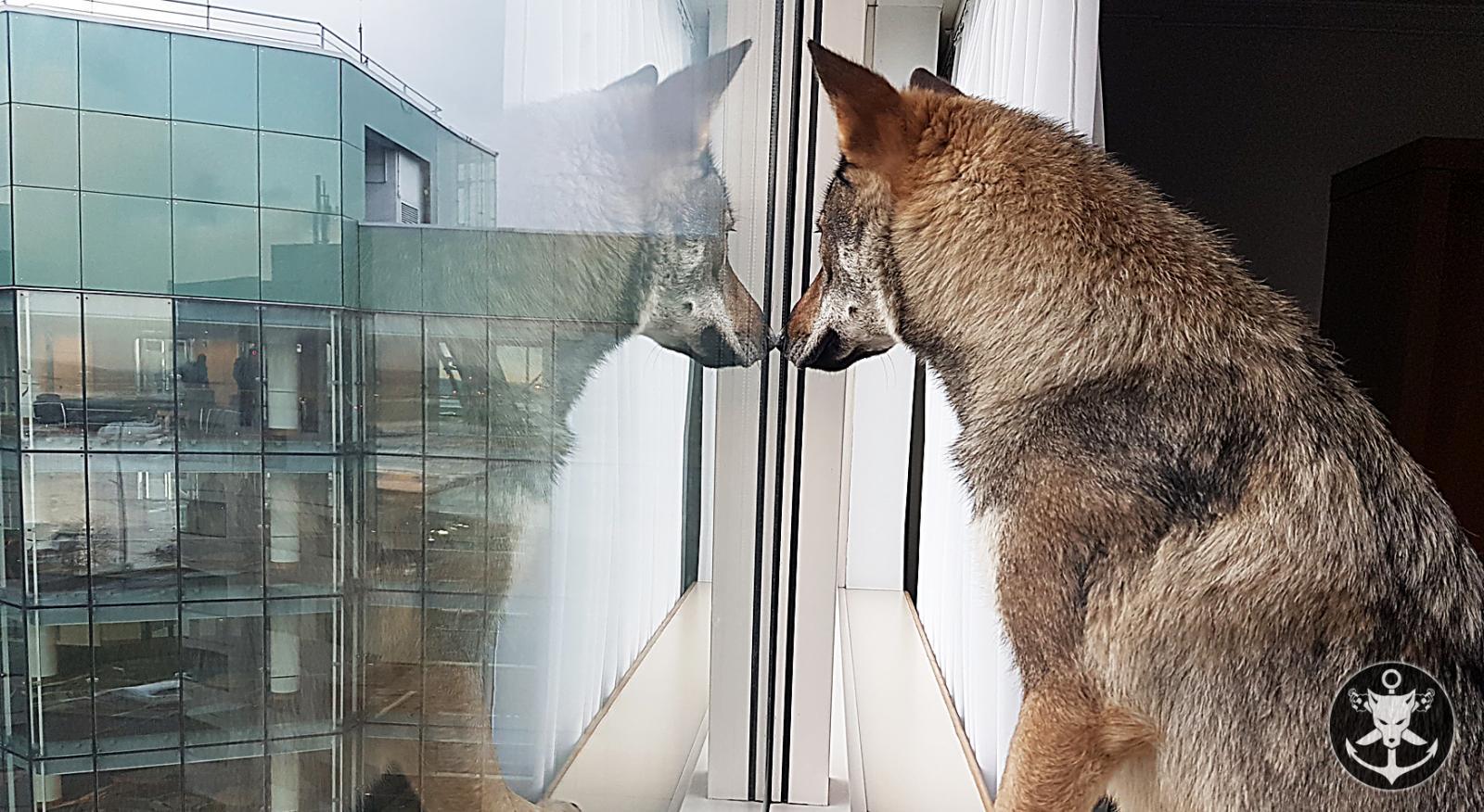 L'ancre Des Loups