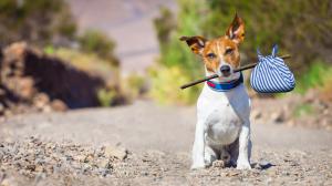 Confier son chien à une pension pendant les vacances