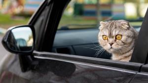 Mon chat vomit en voiture