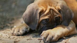 L'anxiété chez le chien : sachez la repérer et l'empêcher de s'aggraver