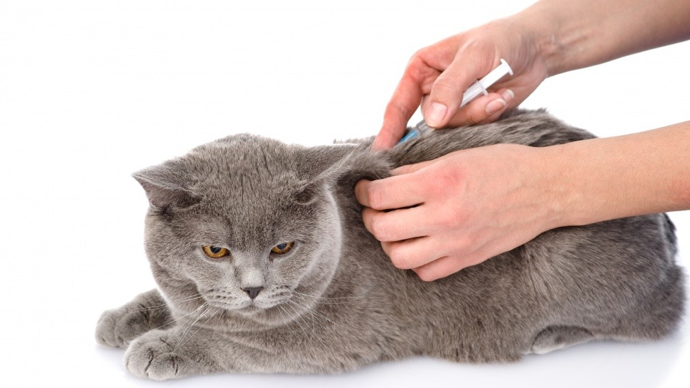 Les propriétaires de chat face à la vaccination