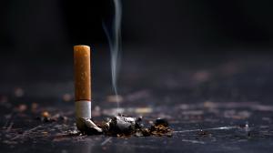 Effets du tabagisme passif sur les chats et les chiens