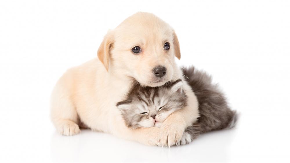 Création des fiches de vos chiens / chats