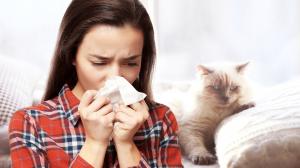 Allergie aux poils de chat - Précautions à prendre pour les éviter