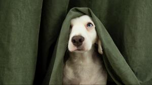 Mon chien a très peur de certains bruits - Que faire ?