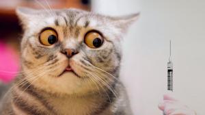 Diabète félin, le chat aussi ! - Ne pas se laisser impressionner par les piqûres d'insuline !