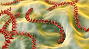 La leptospirose chez le chien - Une maladie du chien et aussi de l'homme