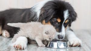 Importance de l'eau pour nos chats et chiens